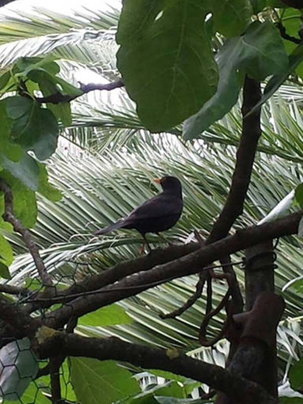 house-in-budva--animals--bird